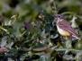 Kleine grondvogels
