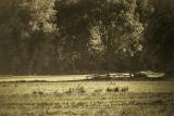 Green grass, farm gate